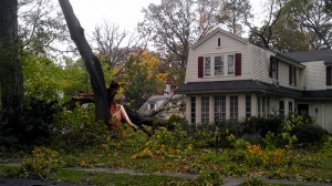 Hurricane Sandy Downs Tree in Pelham New York 2012