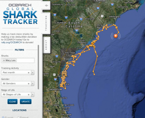 Ocearch Global Shark Tracker Mary Lee