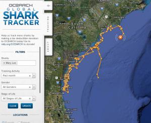 Ocearch Global Shark Tracker Mary Lee