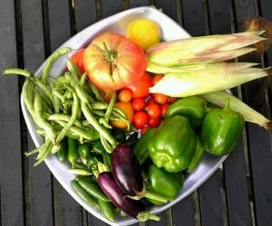 Garden Harvest - August 28, 2013